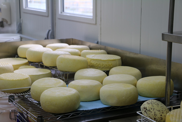 Wangapeka Cheese